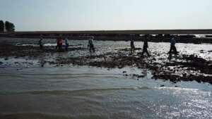 Eco Oester Ko de Oesterman oesters rapen Oosterschelde